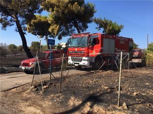 Φωτογραφία για Βίντεο φωτος από τη φωτιά στην Αρτέμιδα