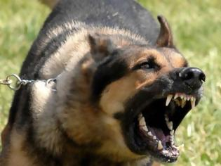 Φωτογραφία για Σκύλος κατασπάραξε μέχρι θανάτου βρέφος 12 ημερών
