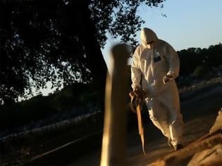 Φωτογραφία για Προειδοποίηση ΠΟΥ: «Ανησυχητικές τάσεις σε ορισμένες χώρες» πριν την εποχική γρίπη 23:3316 Σεπτεμβρίου 2020