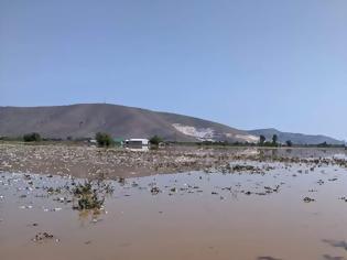 Φωτογραφία για Καρδίτσα: Ανυπολόγιστες οι ζημιές στις καλλιέργειες - Σε «αδιέξοδο» οι αγρότες