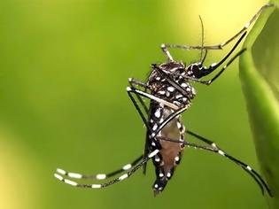 Φωτογραφία για Τα κουνούπια ΔΕΝ μεταδίδουν τον κοροναϊό