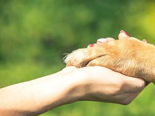 Φωτογραφία για Παγκόσμια Ημέρα των Ζώων: «Οι ήρωες υιοθετούν»