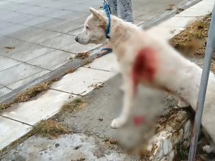 Φωτογραφία για Νίκαια: Καθηγητής μαχαίρωνε σκύλο στα πλευρά στη μέση του δρόμου