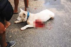 Συγκέντρωση με καπνογόνα έξω από το σπίτι του καθηγητή που μαχαίρωσε τον σκύλο. Γιατι δεν τον ανέλαβε ο Κούγιας