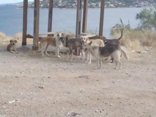 Φωτογραφία για Παράτησαν στη Σαλαμίνα 4.000 σκυλιά που τους ήταν βάρος. Ο Δήμος ζητά βοήθεια