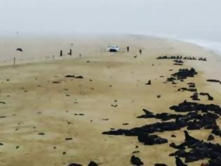 Φωτογραφία για Μυστήριο στη Ναμίμπια: Πάνω από 5.000 μωρά φώκιας ξεβράστηκαν στις ακτές