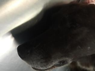 Φωτογραφία για Μαχαίρωσαν αδέσποτο σκύλο και στην Αλεξανδρούπολη!