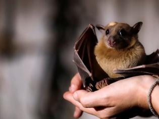 Φωτογραφία για Επιστήμονες από Γερμανία και ΗΠΑ: Άρρωστες νυχτερίδες κρατούν αποστάσεις για να μην κολλήσουν τις άλλες