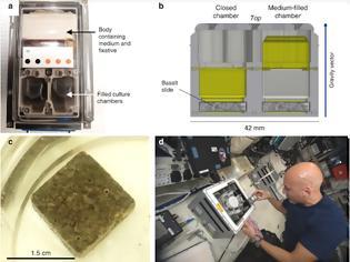Φωτογραφία για Μικρόβια που τρώνε πετρώματα, θα βοηθήσουν στις εξορύξεις στο διάστημα