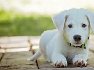 Φωτογραφία για Κατά 78% αυξάνεται η πιθανότητα να κολλήσουν κορονοϊό όσοι βγάζουν τον σκύλο βόλτα