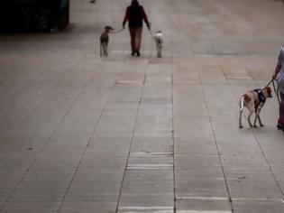 Φωτογραφία για Έρευνα: Κατά 78% αυξάνεται η πιθανότητα να κολλήσουν κορωνοϊό όσοι βγάζουν τον σκύλο βόλτα
