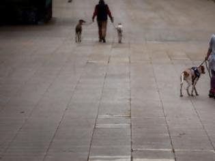 Φωτογραφία για Ανθρώπων και σκύλων...