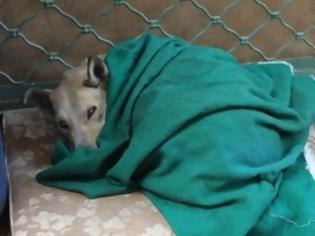 Φωτογραφία για Πυροβόλησε και σκότωσε σκυλί., στο Ηράκλειο. Συνελήφθη