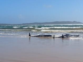 Φωτογραφία για Νέα Ζηλανδία: Περίπου 100 φάλαινες και δελφίνια πέθαναν αφού εξόκειλαν σε απομονωμένα νησιά