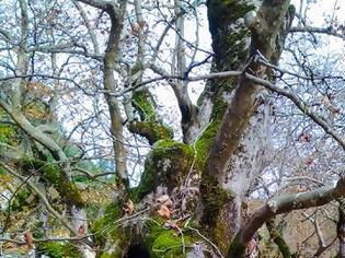 Φωτογραφία για Ένα ταξίδι στις ομορφιές της Φθινοπωρινής φύσης στα  Ακαρνανικά όρη και στο ποτάμι της Νήσσας με το φακό του Σάκη Μπόνια