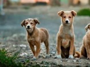 Φωτογραφία για Οι σκύλοι έχουν την ικανότητα να ανιχνεύουν ασθενείς με κοροναϊό