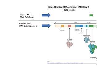 Φωτογραφία για Ο κινδυνος(?) για το γονιδιωμα μας απο το εμβολιο RNA.