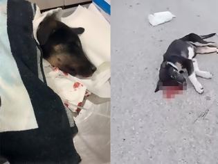 Φωτογραφία για Ψάθα Βιλίων: Άγνωστος σκοτώνει αδέσποτα σκυλάκια - Εικόνες ντροπής