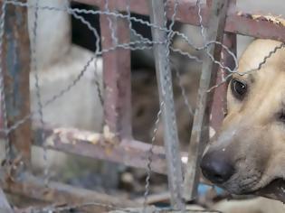 Φωτογραφία για Χανιά: Κτηνοτρόφος κρέμασε και έγδαρε ζωντανούς δύο σκύλους!
