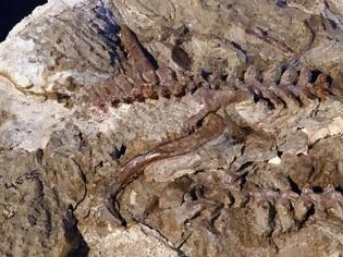 Φωτογραφία για Ανακαλύφθηκε ερπετό πρόγονος του πτερόσαυρου που έζησε πριν από 237 εκατ. χρόνια