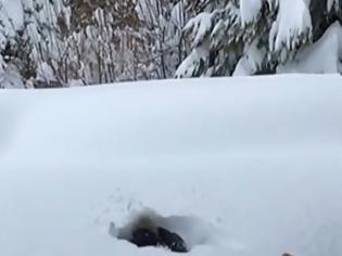 Φωτογραφία για ΗΠΑ: Στο στόχαστρο Ολυμπιονίκης του σκι επειδή έπαιζε με τον γιο της πετώντας τον στο χιόνι