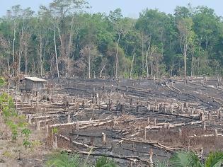 Φωτογραφία για Δραματική πρόβλεψη για τον Αμαζόνιο: Το τροπικό δάσος κινδυνεύει να μετατραπεί σε σαβάνα