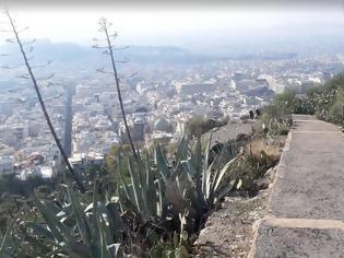 Φωτογραφία για Τον πιο θερμό Ιανουάριο των τελευταίων 160 ετών βιώνει η Αθήνα