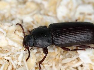 Φωτογραφία για ΕΕ: Τα πρώτα έντομα ενδέχεται να προσγειωθούν στα πιάτα των Ευρωπαίων μέχρι τα μέσα του 2021