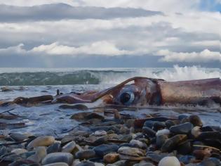 Φωτογραφία για Ρέθυμνο: η θάλασσα συνεχίζει να ξεβράζει καλαμάρια - γίγας στην παραλία της πόλης