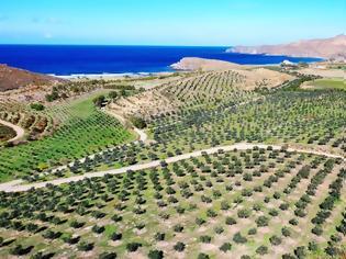 Φωτογραφία για Μυτιλήνη: Η «πράσινη» επένδυση με τις 40.000 ελιές που έδωσε ζωή στον τόπο