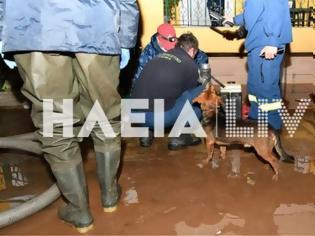 Φωτογραφία για Ηλεία: «Φούσκωσε» το ποτάμι και πλημμύρισε η περιοχή στον Κακόβατο