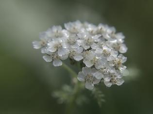 Φωτογραφία για Οι δράσεις των βοτάνων: Τα ισχυρότερα εφιδρωτικά βότανα
