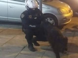 Φωτογραφία για Αστυνομικοί «συνέλαβαν» ...αγριογούρουνο που βόλταρε στην Τούμπα