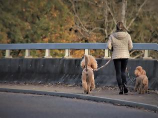 Φωτογραφία για Ελληνική Αστυνομία: Αν βγάζεις βόλτα τον σκύλο χωρίς λουρί το πρόστιμο είναι 300 ευρώ