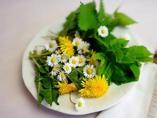 Φωτογραφία για Βότανα με οιστρογονική δράση, πλούσια σε φυτοοιστρογόνα