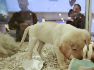 Φωτογραφία για Τέλος στην πώληση κατοικίδιων από pet shop