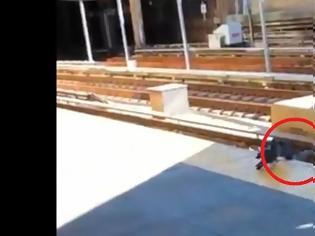 Φωτογραφία για Φτερωτή μαφία: Περιστέρια-νταήδες σπρώχνουν περιστεράκι στις γραμμές του τρένου - Βίντεο.