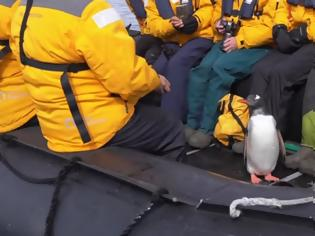Φωτογραφία για Πηγκουίνος πήδηξε σε βάρκα με τουρίστες για να σωθεί από φάλαινα (Video)