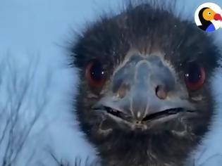 Φωτογραφία για Πως ένα επιθετικό Εμού έγινε φιλικό (Video)