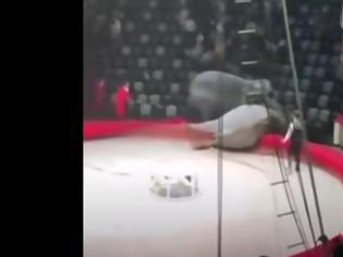 Φωτογραφία για Ρωσία: Ελέφαντες αναστάτωσαν τσίρκο - Ξέσπασε άγριος καυγάς μεταξύ τους (Video)