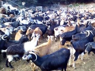 Φωτογραφία για Κώστας Ζαρκαδούλας -Ο Δραστήριος & δημιουργικός κτηνοτρόφος του Ξηρομέρου