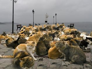 Φωτογραφία για Απίστευτες εικόνες σε Αστακό και Βόνιτσα, εκατοντάδες γάτες στις παραλίες.