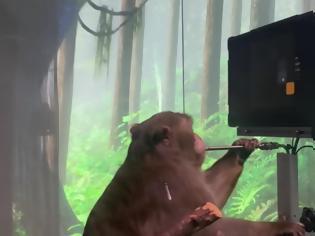 Φωτογραφία για Πίθηκος παίζει pong με το μυαλό του (Video)