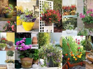 Φωτογραφία για Τρόποι για να διακοσμήσετε εξωτερικούς χώρους με ανοιξιάτικα - καλοκαιρινά φυτά σε γλάστρες