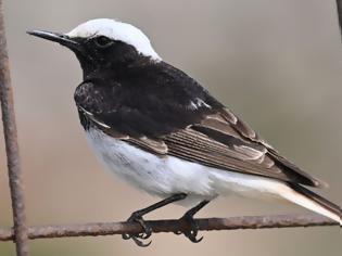 Φωτογραφία για Ένα μοναδικό είδος πουλιού εντοπίστηκε στο Απολιθωμένο Δάσος Λέσβου
