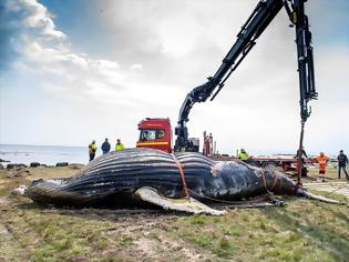 Φωτογραφία για Προσοχή! Η φάλαινα μπορεί να εκραγεί