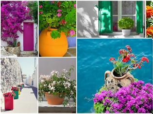 Φωτογραφία για Τα 5 πιο τυπικά φυτά-λουλούδια του ...Ελληνικού καλοκαιριού