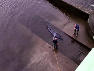 Φωτογραφία για Φάλαινα παγιδεύτηκε στον Τάμεση - Διασώστες πάλεψαν και την έσωσαν (Video)