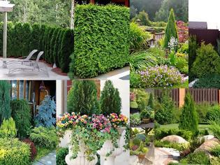 Φωτογραφία για Διαμορφώσεις κήπου με Κωνοφόρα δέντρα