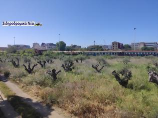 Φωτογραφία για Τι προτίθεται να πράξει η ΓΑΙΑΟΣΕ προκειμένου να μη ξεραθούν τα ελαιόδεντρα στον παλιό σταθμο Θεσσαλονίκης;